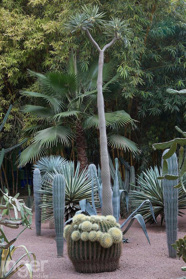 Cactus Collection at the Majorelle Gardens in Marrakech, Morocco