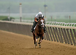 June 19, 2020: Belmont Stakes favorite Tiz The Law exercises as horses prepare for the Belmont Stakes at Belmont Park in Elmont, New York. Scott Serio/Eclipse Sportswire/CSM