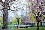 Springtime in the Boston Public Garden, Boston, MA, USA