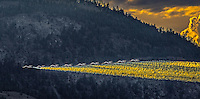 Fine Art Action scenic of Canada's Snowbirds flying besides the mountains in the Okanagan Valley in British Columbia, Canada. <br /> The formation was perfect as the jets appeared to be resting on a golden plume of smoke.