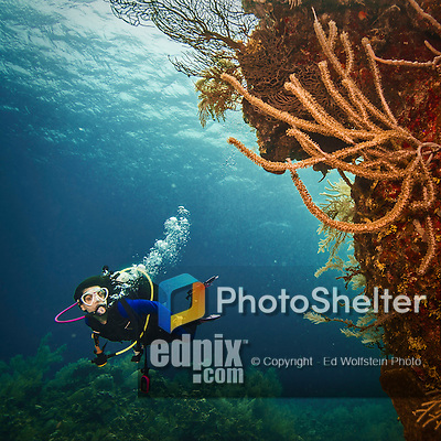 9 June 2015: SCUBA Diver Sally Herschorn explores the coral reef at Spanish Bay Reef, on the North Shore of Grand Cayman Island. Located in the British West Indies in the Caribbean, the Cayman Islands are renowned for excellent scuba diving, snorkeling, beaches and banking.  Mandatory Credit: Ed Wolfstein Photo *** RAW (NEF) Image File Available ***