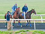Animal Kingdom, winner of the 137th Kentucky Derby, continues to train for the Preakness at the Fair Hill Training Center on May 14, 2011 in Fair Hill, Maryland.
