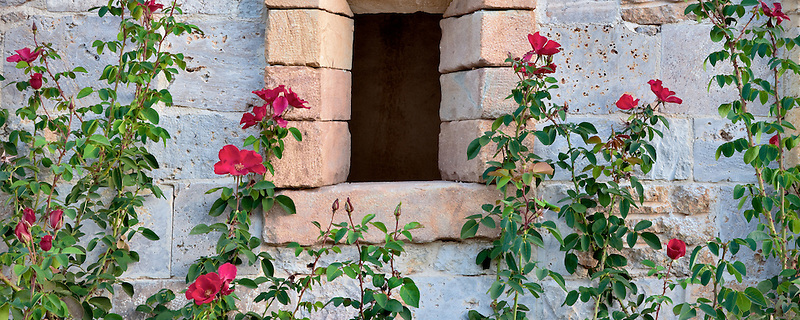 Rose against stone wall with window. Castello di Amorosa. Napa Valley, California. Property relased