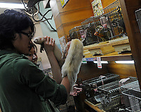 A teenage boy and girl hold white ferrets which are for sale in the world's most exotic pet shop called Noah Inner City Zoo, with cages of squirrel monkey in the background. The monkeys sell for 6,235 US$ for a male and 7000 US$ for a female. The Noah Inner City Zoo is a pet shop that sells exotic animals. The 'zoo' claims to have more than 300 species for sale, many of which are rare and some are endangered.