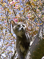 Cat looking out over branch<br />