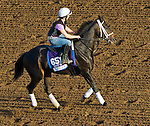 October 27, 2014:  Carve, trained by Brad Cox, exercises in preparation for the Breeders' Cup Dirt Mile at Santa Anita Race Course in Arcadia, California on October 27, 2014. John Voorhees/ESW/CSM