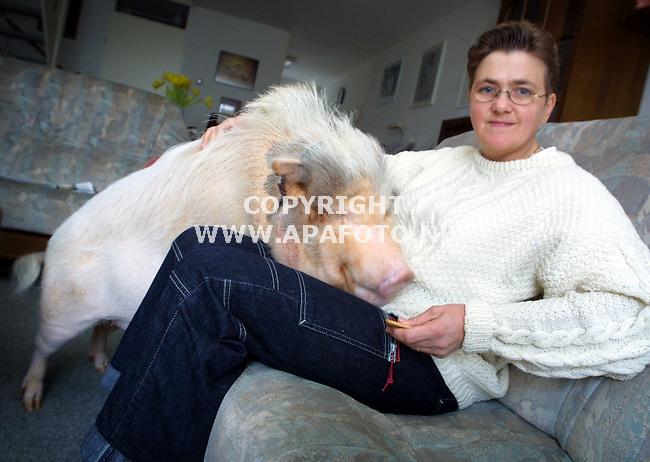 Apeldoorn , 200401  Foto: koos Groenewold/ APA Foto<br /> Mevr. Sienema uit Apeldoorn met haar huisdier: een hangbuikzwijntje Kissie. Het beest kreeg mevrouw anderhalf jaar geleden op haar bruiloft. Al die tijd leefde het beest als een `hondje` Het loopt door de woonkamer en daar heeft het haar eigen box.<br /> Er is echter een groot probleem: De familie woont nog net binnen het gebied waar alle evenhoevigen geruimd moeten worden> De grens loopt 100 meter van hun huis......<br /> Deze week is het beestje ingeent tegen MKZ en naar verwachting zal het beestje volgende week worden `geruimd`. Dit uiteraard tot groot verdriet van mevr. Siemena.