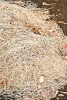 Protection of tender plants for winter with organic material straw and chicken wire mesh