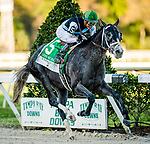 OLDSMAR, FL - MARCH 11: Tapwrit #5, ridden by Jose Ortiz (green hat), wins the Tampa Bay Derby on Tampa Bay Derby Day at the Tampa Bay Downs on  March 11, 2017 in Oldsmar, Florida. (Photo by Douglas DeFelice/Eclipse Sportswire/Getty Images)