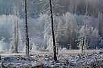 Skagit Valley, Washington,