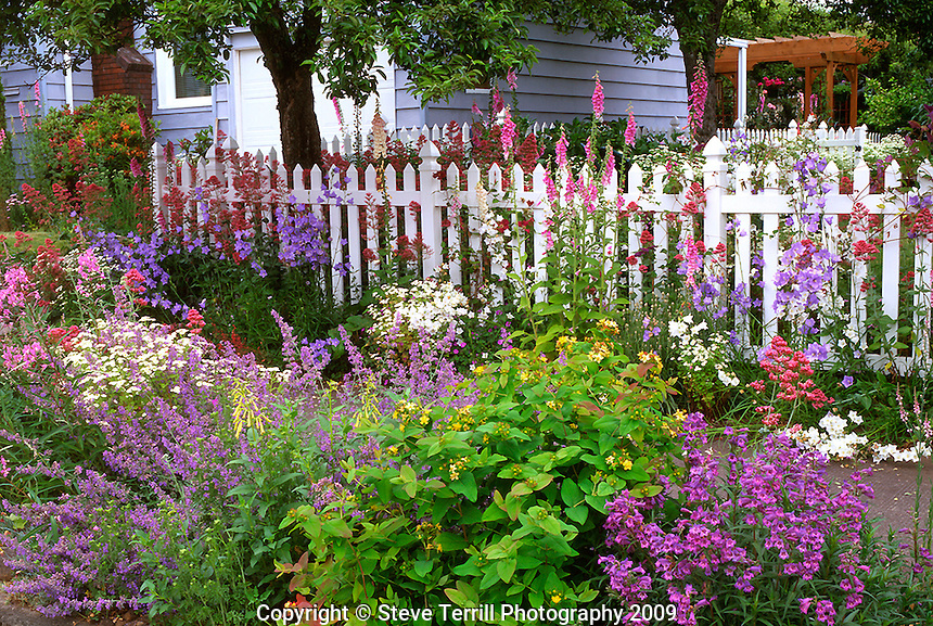 Color explosion of flowers in garden in NE Portland, Oregon
