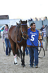 HOT SPRINGS, AR - MARCH 19: Discreetness #6 during the walk over for the the Rebel Stakes at Oaklawn Park on March 19, 2016 in Hot Springs, AR. (Photo by Ciara Bowen/Eclipse Sportswire/Getty Images)