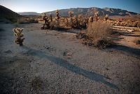 Cholla shadows in Anza Borrego Desert.