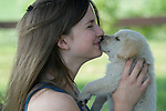 Yellow Labrador retriever (AKC) puppy being kissed by teenager