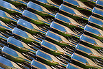 Bottles of sparkling wine reflect brown colors of nearby building