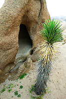 Joshua tree and cave. Joshua Tree National Park, California