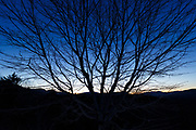 Silhouette of tree branches at night at the Sugar Hill Scenic Vista along the Kancamagus Scenic Byway in the New Hampshire White Mountains during the winter months.