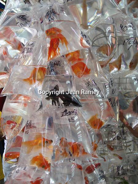 Something's Fishy - Hong Kong Goldfish Market