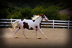 BLUE RIBBON/1st place in Action, Photo Journalism, category   A horse names Texas<br /> Mariposa County Fair - Award Winning Images<br /> Fine Art Landscape  <br /> Photo by Joelle Leder Photography Studio ©
