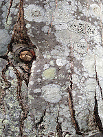 Rock Face Detail, Witherle Woods, Castine, Maine, US