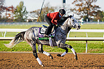 November 5, 2020: Halladay, trained by trainer Todd A. Pletcher, exercises in preparation for the Breeders' Cup Mile at Keeneland Racetrack in Lexington, Kentucky on November 5, 2020. Dan Heary/Eclipse Sportswire/Breeders Cup/CSM