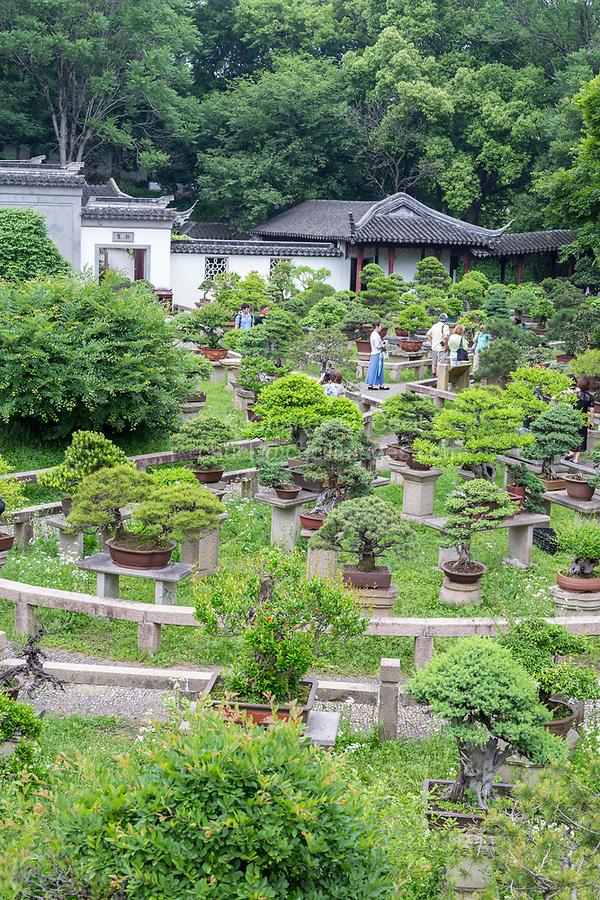 Suzhou, Jiangsu, China.  Bonzai Garden, Tiger Hill.