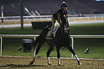 March 25, 2021: Golden Shaheen contender Yaupon trains on the track for trainer Steve Asmussen at Meydan Racecourse, Dubai, UAE.<br />