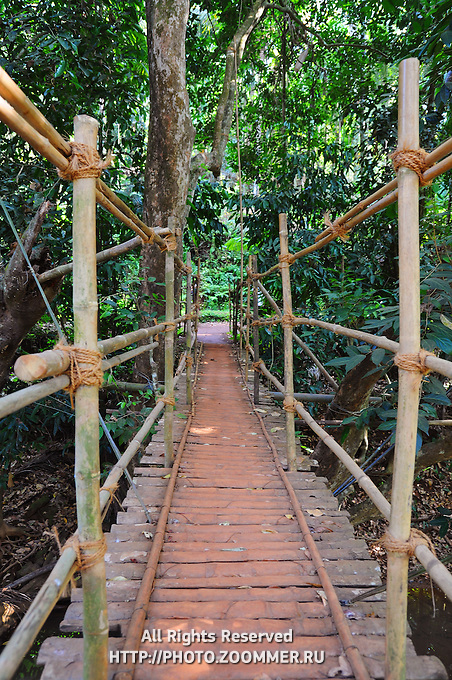 Indiana Johns's style hanging bridge made of bamboo and ropes