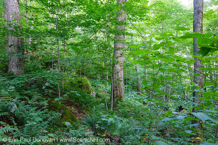 Lafayette Brook Scenic Area during the summer months in the White Mountains, New Hampshire USA