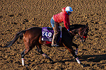 November 3, 2020: Venetian Harbor, trained by trainer Richard Baltas, exercises in preparation for the Breeders' Cup Filly & Mare Sprint at Keeneland Racetrack in Lexington, Kentucky on November 3, 2020. John Voorhees/Eclipse Sportswire/Breeders Cup/CSM