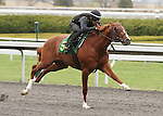April 03, 2014: Hip 54 Kitten's Joy - Talking Treasure consigned by Niall Brennan worked 1/8 in 09:3.  Candice Chavez/ESW/CSM