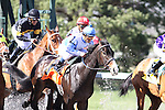 Orchestrator with Alex Solis up at the start of The Bourbonette Oaks at Turfway Park. 03.27.2010