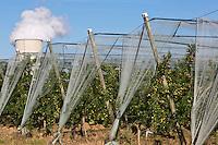 Europe/France/Midi-Pyrénées/82/Tarn-et-Garonne/ Golfech: Vergers d'arbres fruitiers et Centrale Nucléaire de Golfech
