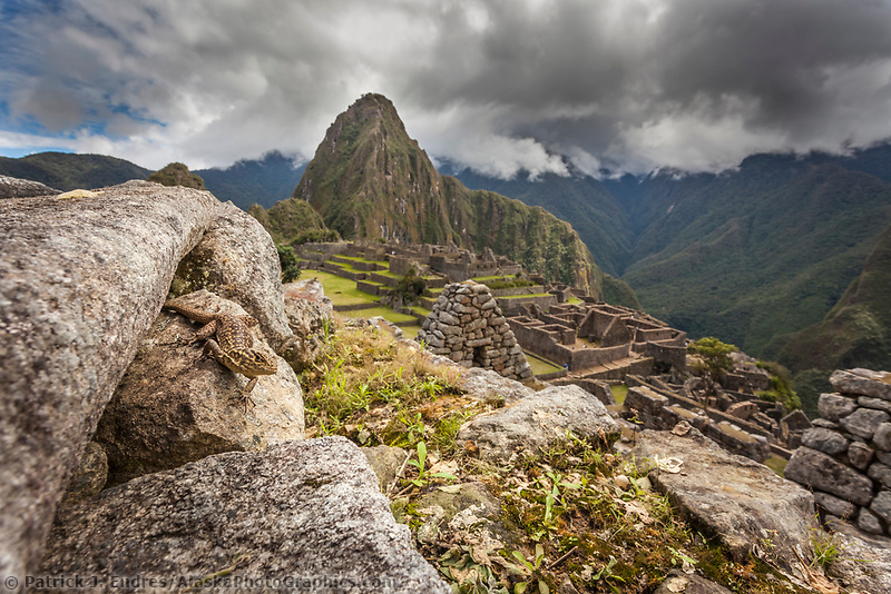 """Lizard on the stone wall of Machu Picchu, the ancient """"lost city of the Incas"""", 1400 CA, 2400 meters. Discovered by Hiram Bingham in 1911. One of Peru's top tourist destinations. Huayanapichu (young mountain) in the distance."""