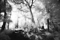 Monochrome_Forests