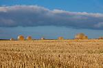 Europa, DEU, Deutschland, Rheinland-Pfalz, Hintertaunus, Westlicher Hintertaunus, Spaetsommer, Agrarlandschaft, Getreidefeld nach der Getreideernte, Strohballen, Abendstimmung, Goldene Stunde, Wolkenstimmung, Landwirtschaft, Landwirtschaftlich, Agrar, Agrarwirtschaft, Wetter, Wetterelemente, Wetterlage, Wetterkunde, Witterung, Witterungsbedingungen, Wettererscheinungen, Meteorologie, Wettervorhersage, <br /> <br /> [Fuer die Nutzung gelten die jeweils gueltigen Allgemeinen Liefer-und Geschaeftsbedingungen. Nutzung nur gegen Verwendungsmeldung und Nachweis. Download der AGB unter http://www.image-box.com oder werden auf Anfrage zugesendet. Freigabe ist vorher erforderlich. Jede Nutzung des Fotos ist honorarpflichtig gemaess derzeit gueltiger MFM Liste - Kontakt, Uwe Schmid-Fotografie, Duisburg, Tel. (+49).2065.677997, ..archiv@image-box.com, www.image-box.com]