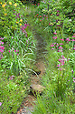 Woodland stream planted with dark magenta-red Mealy Primroses (Primula pulverulenta). The Laurent-Perrier Chatsworth Garden designed by Dan Perarson, RHS Chelsea Flower Show 2015.
