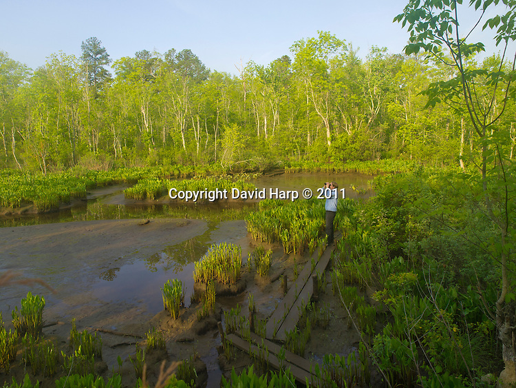 Birding in a wetland in the spring along the Mattaponi River, Virginia