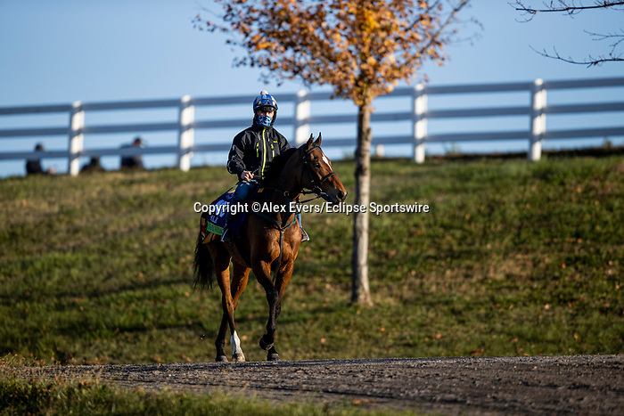 November 3, 2020: Safe Voyage, trained by trainer John Quinn, exercises in preparation for the Breeders' Cup Mile at  Keeneland Racetrack in Lexington, Kentucky on November 3, 2020. Alex Evers/Eclipse Sportswire/Breeders Cup