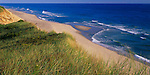 Cape Cod National Seashore, MA<br /> Dune grasses on the upper sand cliffs of Longnook Beach at Truro
