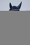 TAKARAZUKA,JAPAN-JUNE 26: Marialite,ridden by Masayoshi Ebina,attends the winning ceremony after winning the Takarazuka Kinen at Hanshin Racecourse on June 26,2016 in Takarazuka,Hyogo,Japan (Photo by Kaz Ishida/Eclipse Sportswire/Getty Images)
