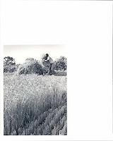 U.S. Lifestyle and Wheat
