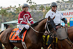 """DEL MAR, CA  AUGUST 17:  #7 Tenfold, ridden by Mike Smith, and pony rider  share a joke in the post parade before the TVG Pacific Classic (Grade 1) """"Win and You're In Breeders' Cup Classic Division"""" on August 17, 2019 at Del Mar Thoroughbred Club in Del Mar, CA. (Photo by Casey Phillips/Eclipse Sportswire/CSM)"""