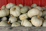 Grey ghost squash, Zacherl's Farm Market, Route 23