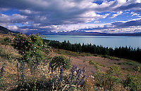 New Zealand,  December 1994  ..New Zealand Lake Tekapo..Photo Kees Metselaar