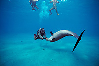 Scuba Diver interacting with Bottlenose Dolphin, Tursiops truncatus, Nuweiba, Egypt, Red Sea., Northern Africa