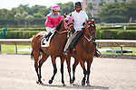 Rex's Last Tour on post parade for The Carry Back Stakes (G3), Calder Race Course, Miami Gardens Florida. 07-07-2012.  Arron Haggart/Eclipse Sportswire.