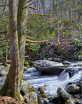 An HDR (High Dynamic Range) image, composed of several exposures of a stream in the Greenbrier section of the Great Smoky Mountains National Park. Smoky Mountain photos by Gordon and Jan Brugman.