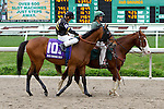 February 21, 2015: Skyring with Mike E Smith up in the Fairgrounds Handicap at the New Orleans Fairgrounds Risen Star Stakes Day. Steve Dalmado/ESW/CSM
