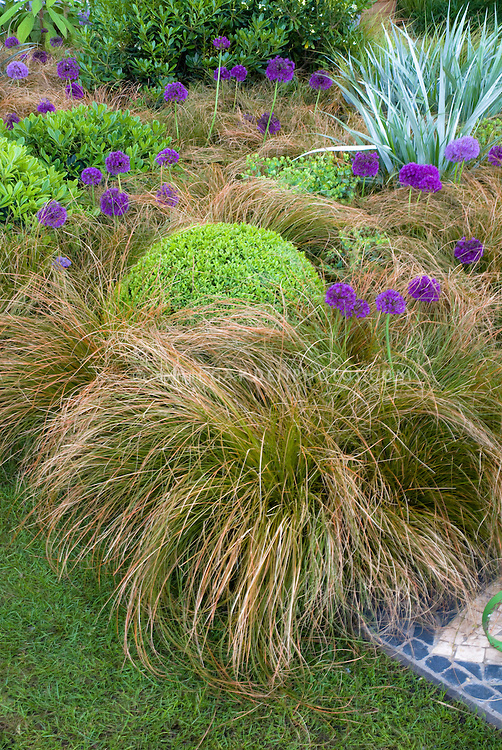 Shapes and textures mixed in the garden with flowers and foliage: spiky Astelia, grassy arching carex, mounded round buxus boxwood shrubs, round purple ornamental onion allium, deck mosaic, Euphorbia